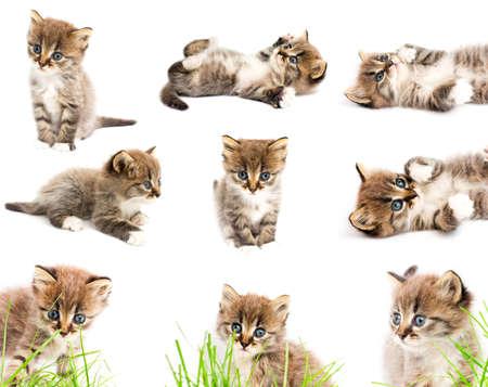 面白い猫のセット。