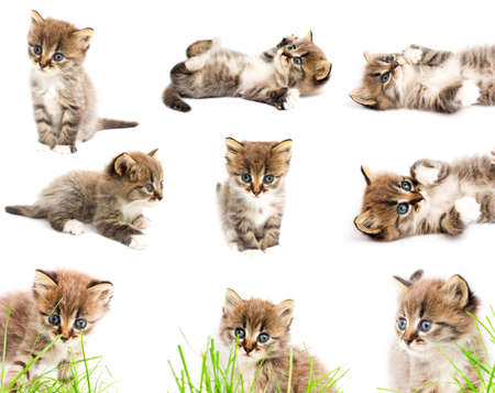 siberian: A set of funny cats.  Stock Photo