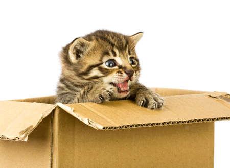 Small kitten in box photo