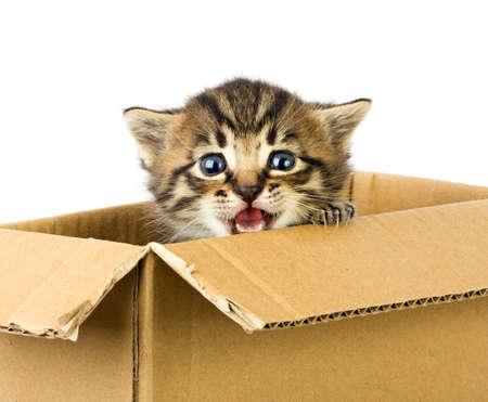 Small kitten in box