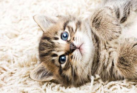 Funny kitten in carpet  Standard-Bild
