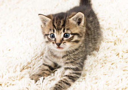 Funny kitten in carpet  Stock Photo - 8033355