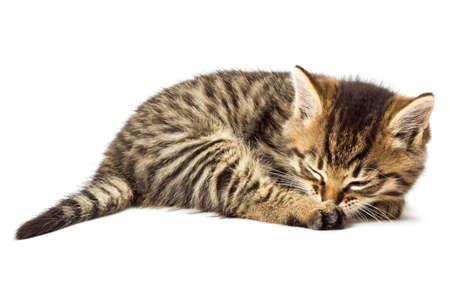 Funny kitten isolate in white photo