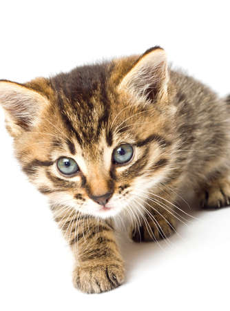 Funny kitten isolate in white Stock Photo - 8101776