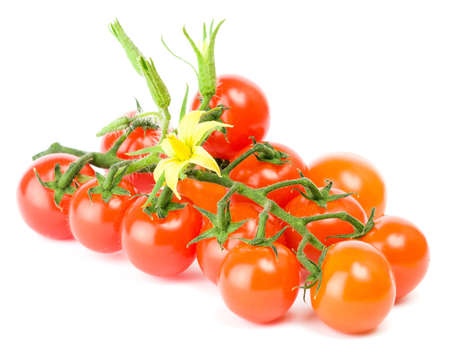 Grape or cherry tomato branch with  photo