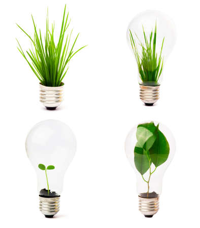 lightbulb with plant growing inside  photo