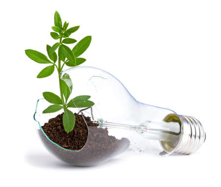 growing inside: lightbulb with plant growing inside