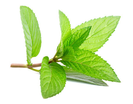 Fresh green mint isolated on white  photo