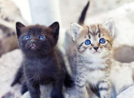 子猫 写真素材 - 10223226