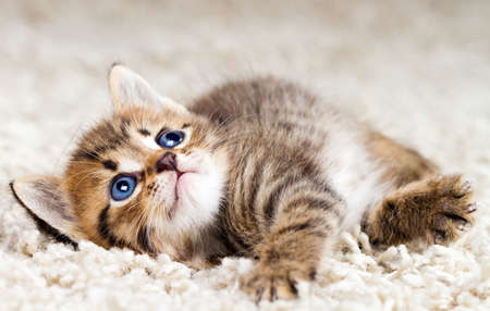 Funny kitten in carpet photo