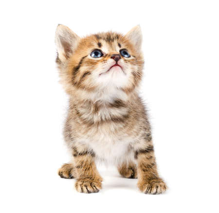 tubby: Funny kitten