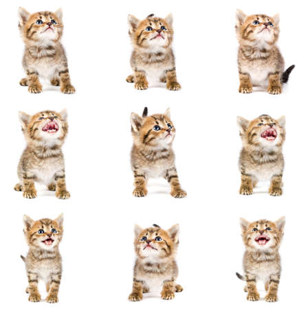 tubby: Funny kitten set Stock Photo