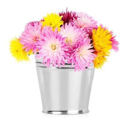 Chrysanthemum in bucket on white background photo