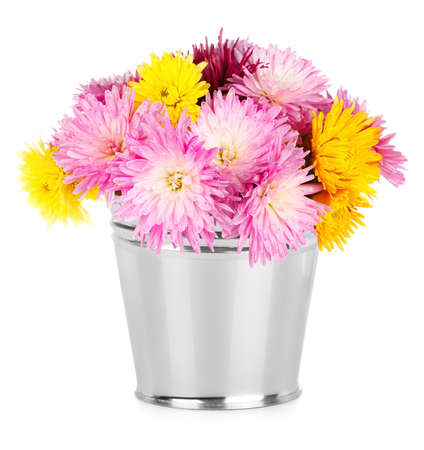 Chrysanthemum in bucket on white background photo