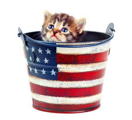 バケツの中の子猫 写真素材