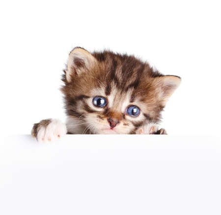 Kitten banner isolated on white photo