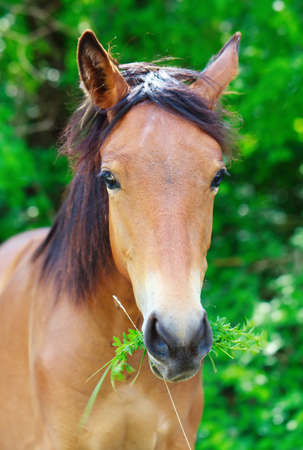 Portrait of a horse Stock Photo - 13796676