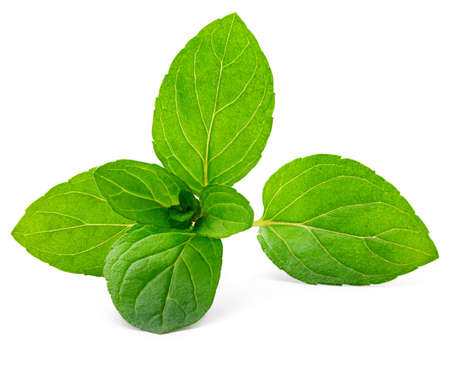 mint leaves isolated on white photo