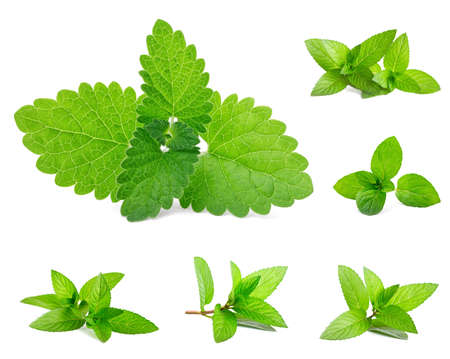 mint leaves:  Fresh mint isolated on white. Set  Stock Photo