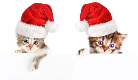 christmas pussy:  Kitten santa cap banner  Stock Photo