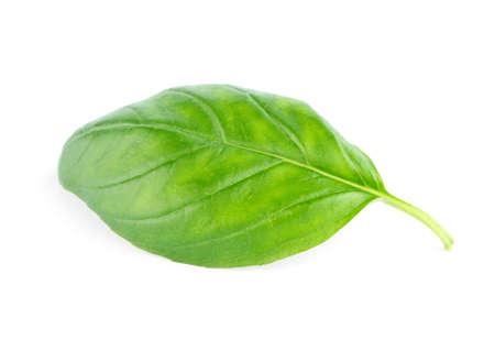 fresh leaf: Fresh green leaf basil Isolated on white background