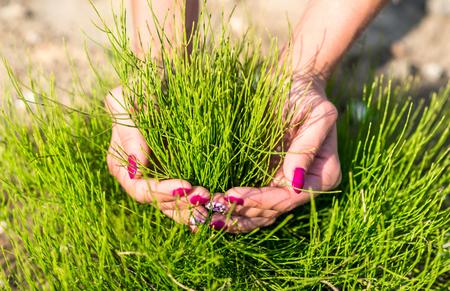 Green fresh grass in girls hands photo