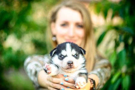 prety: Little prety husky puppy outdoor in womans hands