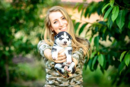 black newborn: Little prety husky puppy outdoor in womans hands