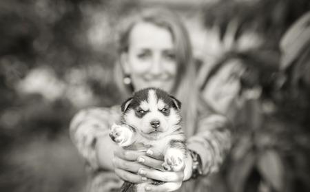 cute babies: Poco prety cachorro de husky al aire libre en manos de mujeres