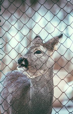 malla metalica: Pequeño ciervo bebé al aire libre detrás de malla metálica