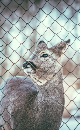 mother and baby deer: Little baby deer outdoor behind metal mesh Stock Photo