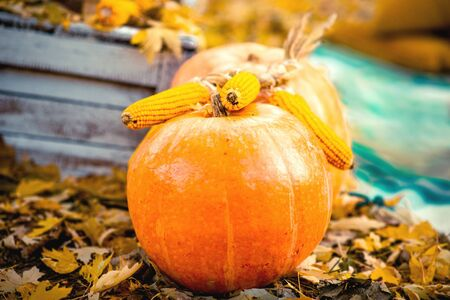 background yellow: Pumpkin with corn on the ground with autumn leafs