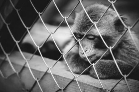 servitude: Lonely monkey sitting in the cage at the zoo