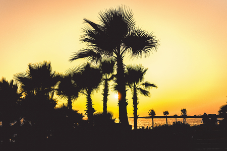 Silhouette of tropical palm trees and seaside with sun light at sunset time
