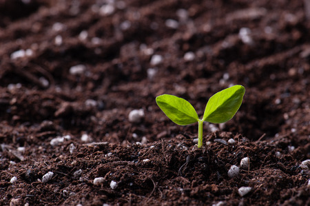 soil conservation: Green sprout growing from seed in organic soil Stock Photo