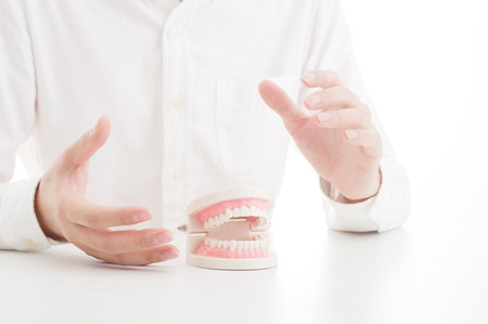 dental clinics: Model of the teeth Stock Photo