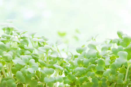 Green sprout growing 写真素材