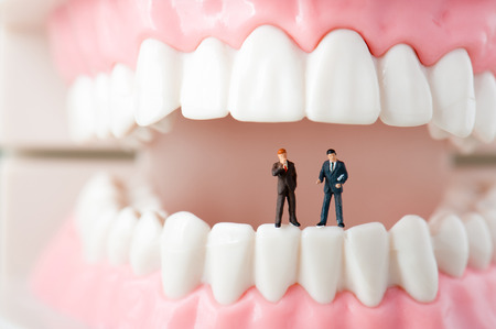 Model of the teeth Stock Photo