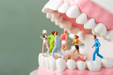 oral care: Model of the teeth Stock Photo