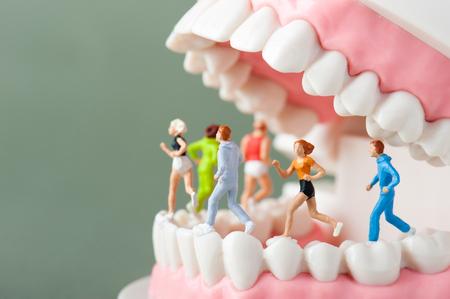 limpieza: Modelo de los dientes Foto de archivo