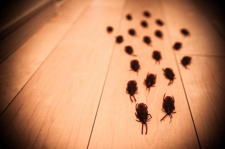 ゴキブリ 写真素材