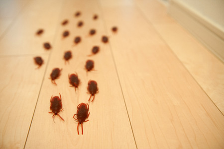 repel: Cockroach