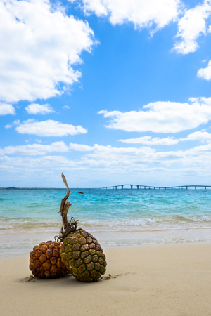 sandy beaches: Sandy beaches and tropical image