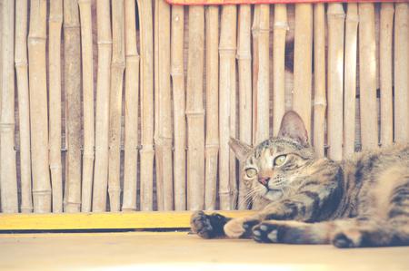 stray: Stray cat
