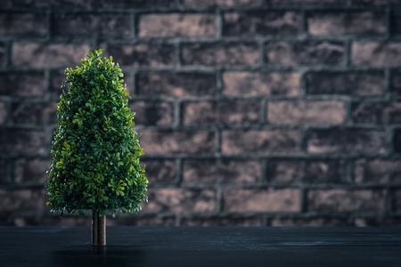 plantando arbol: La plantaci�n de �rboles