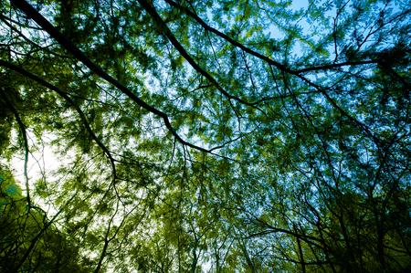 large tree: Large tree