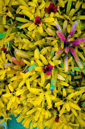 nurture: Foliage plant, texture material