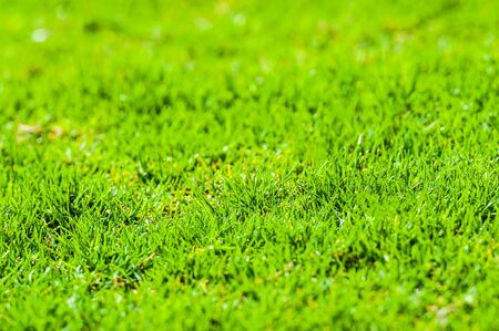 tuft: Tuft of grass