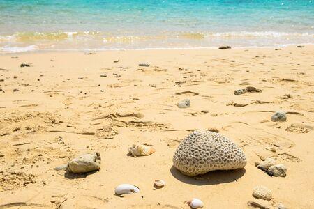 砂浜とサンゴ