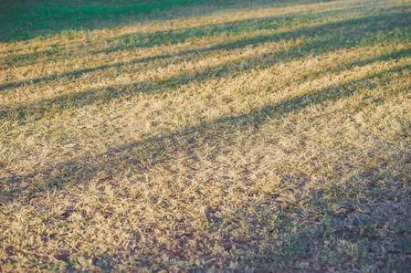 shadow: Lawn, shadow